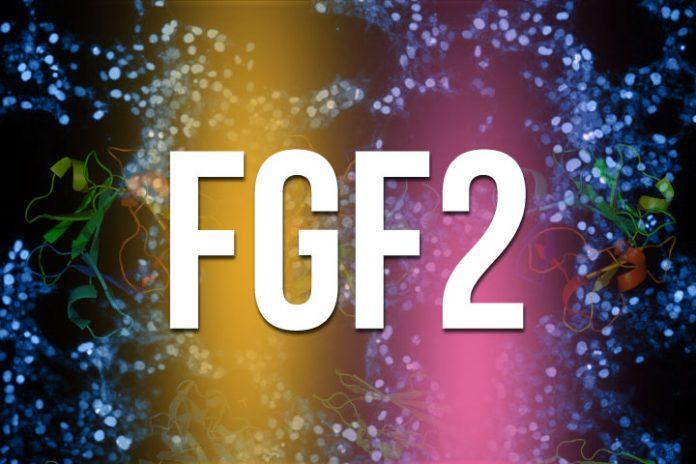 laminine fgf