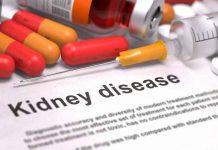 laminine on kidney
