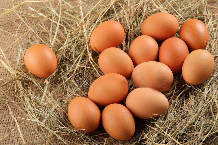 Young Tissue Extract  and Fertilized Avian Egg Extract